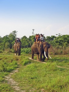 Elefanten-Safari im Chitwan-Nationalpark