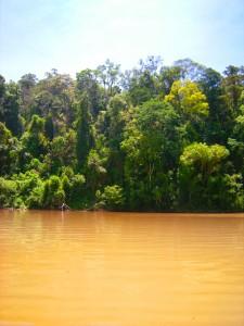 ältester Regenwald der Welt
